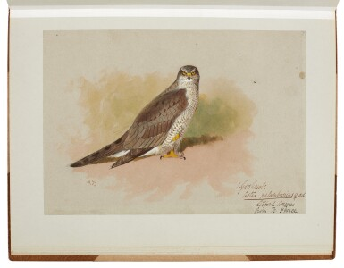 View 7. Thumbnail of Lot 33. Archibald Thorburn | An album containing eight original drawings of birds of prey.