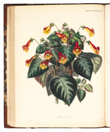 View 2. Thumbnail of Lot 18. Horticultural Society of London | Transactions of the Horticultural Society of London, 1820-1848, 10 volumes.