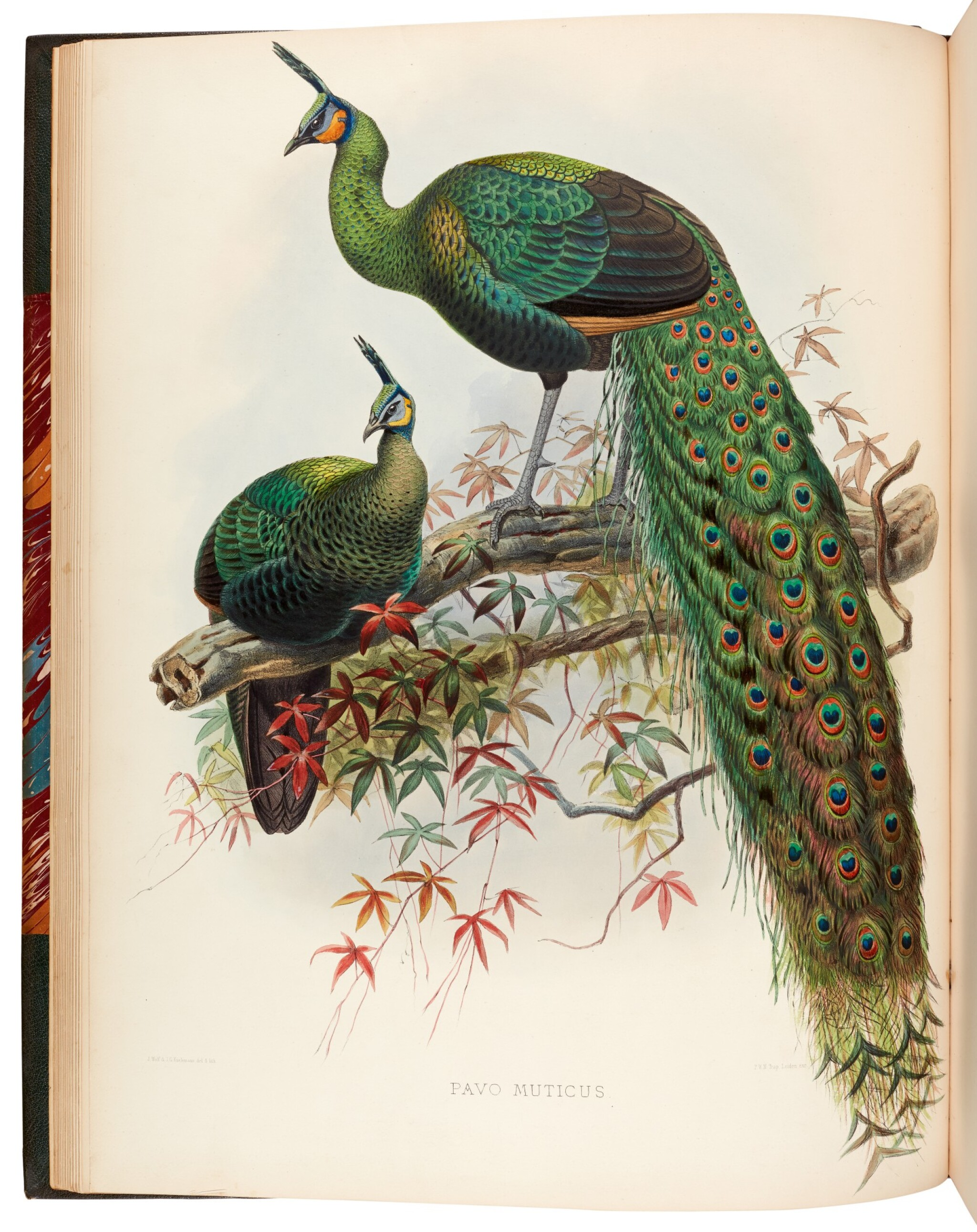 View full screen - View 1 of Lot 31. ELLIOT, D.G.   A Monograph of the Phasianidae, New York 1870-1872, 2 volumes.