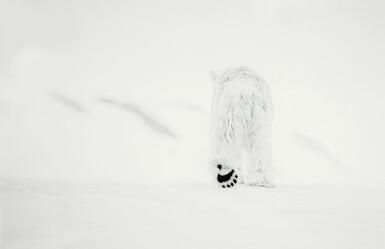 DAVID YARROW | 78 DEGREES NORTH, SVALBARD, NORWAY