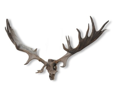 View 3. Thumbnail of Lot 1. A pair of fossilised 'Irish elk' antlers, Prehistoric.