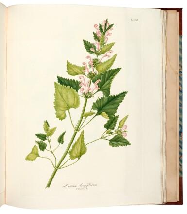 View 2. Thumbnail of Lot 341. Tenore. Flora Napolitana. 1811-[1838]. 7 volumes.