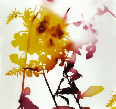 View 1. Thumbnail of Lot 50. JAMES WELLING | 'UNTITLED' (FLOWERS).