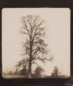 Elm Tree, Lacock Abbey