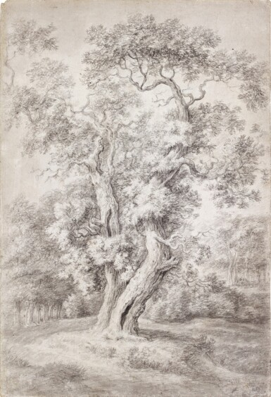 View 1. Thumbnail of Lot 43. Study of an Oak Tree in Woodland.