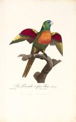 Levaillant | Histoire Naturelle des Perroquets, 1801-[1805], 2 volumes
