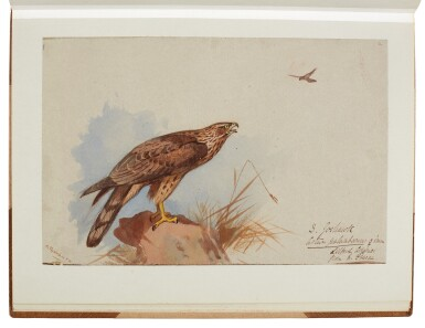 View 2. Thumbnail of Lot 33. Archibald Thorburn | An album containing eight original drawings of birds of prey.