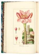 Mordant de Launay and Loiseleur-Deslongchamps | Herbier général de l'amateur, [1810]-1827, 8 volumes