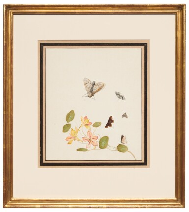 View 3. Thumbnail of Lot 131. NICOLAAS STRUYK  |  GOLDEN COLUMBINE WITH BUTTERFLIES AND MOTHS.