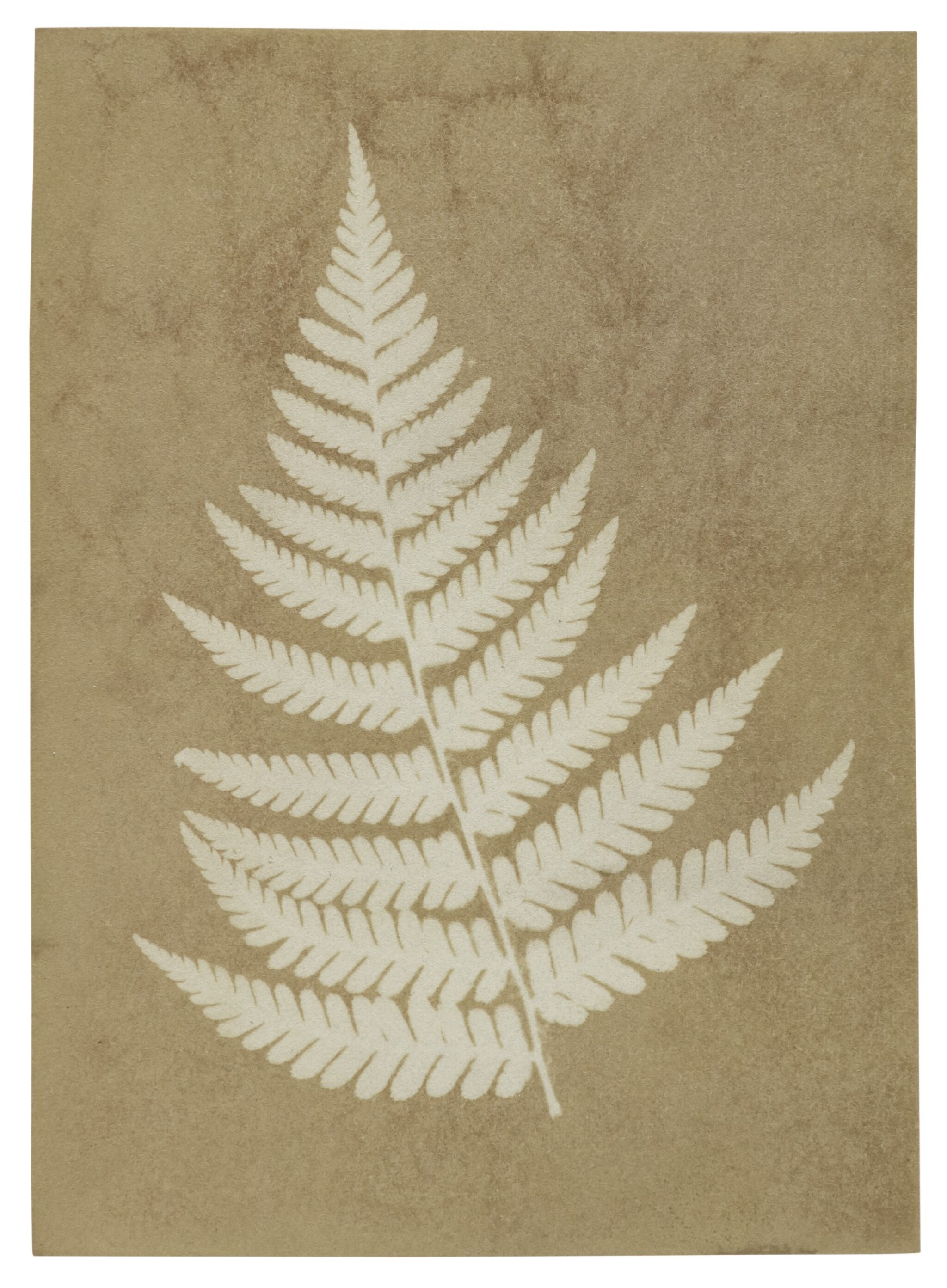 """View full screen - View 1 of Lot 89. TAYLOR, ALFRED SWAINE   Early """"photogenic drawing"""" photograph of a fern, dated on the verso by Taylor, 2 December 1839."""