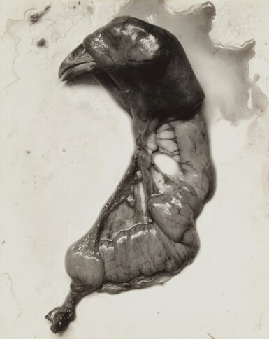 View 1. Thumbnail of Lot 79. 'Negative #74' (Chicken Parts) .