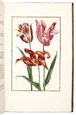 Merian and Rabel | Histoire générale des insectes de Surinam et de toute l'Europe, 1771, 3 volumes