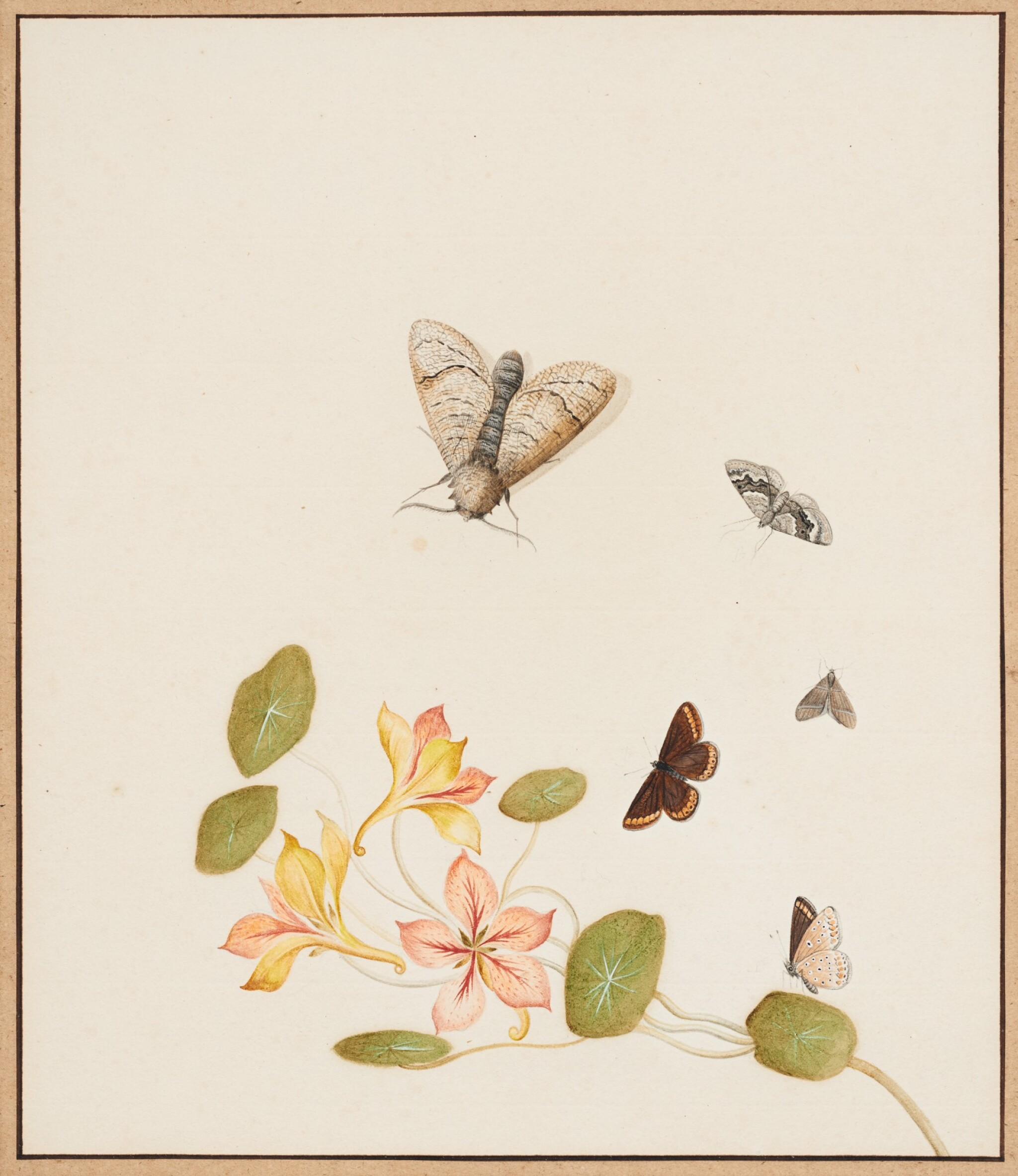 View full screen - View 1 of Lot 131. NICOLAAS STRUYK  |  GOLDEN COLUMBINE WITH BUTTERFLIES AND MOTHS.