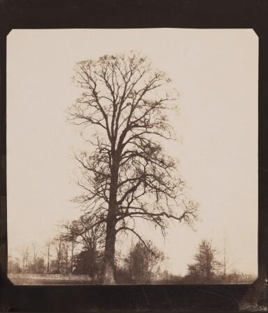 View 1. Thumbnail of Lot 48. Elm Tree, Lacock Abbey.