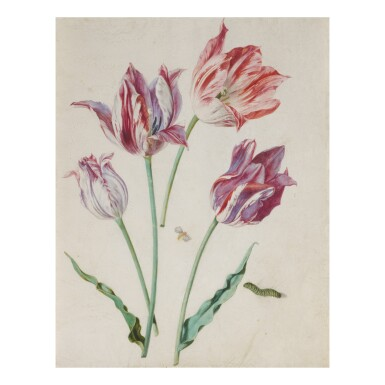 View 1. Thumbnail of Lot 140. ATTRIBUTED TO CARL WILHELM DE HAMILTON   STUDIES OF TULIPS, WITH A MOTH AND CATERPILLAR.