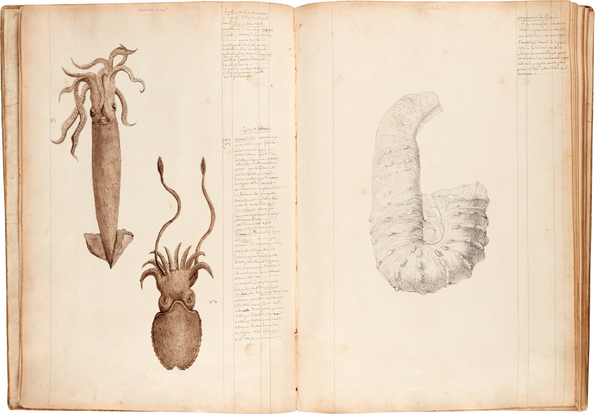 View full screen - View 1 of Lot 40. Payan-Dumoulin | Profusely illustrated manuscript of fossils, France, c.1875-1879.