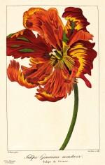 Bessa. Flore des jardiniers, amateurs et manufacturiers. 1836. 2 volumes