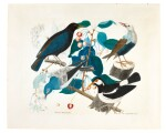 ALOYS ZÖTL | A COMMON BLACKBIRD, A RED-BILLED STARLING, A WESTERN BLUEBIRD AND A PIED MYNA ON A BRANCH OF A CHERRY TREE