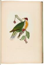 BONAPARTE, C.L. | Iconographie des pigeons, Paris 1857