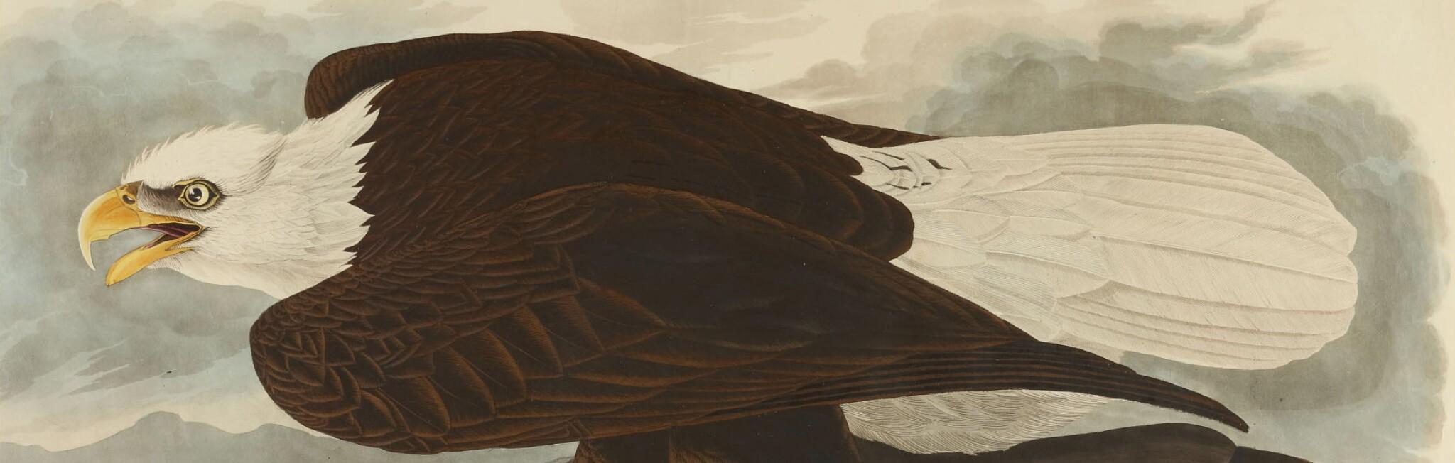 The Birds of America from Original Drawings by John James Audubon