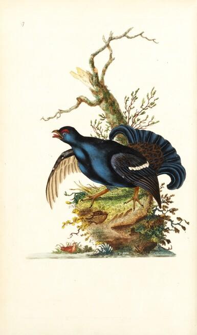 View 1. Thumbnail of Lot 7. Donovan | The Natural History of British Birds. London, 1799-1819, 10 volumes.