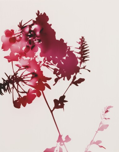 View 3. Thumbnail of Lot 58. JAMES WELLING | SELECTED IMAGES FROM FLOWERS (#005, #008, #009).