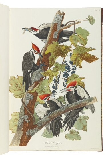 View 6. Thumbnail of Lot 250. JOHN JAMES AUDUBON | The Birds of America; from Original Drawings by John James Audubon. London: Published by the Author, 1827–1838.