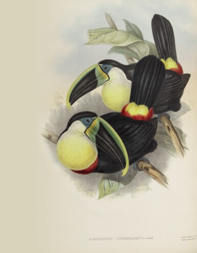 GOULD, JOHN | A Monograph of the Ramphastidae, or Family of Toucans...