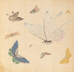 Study of butterflies, China, 19th century
