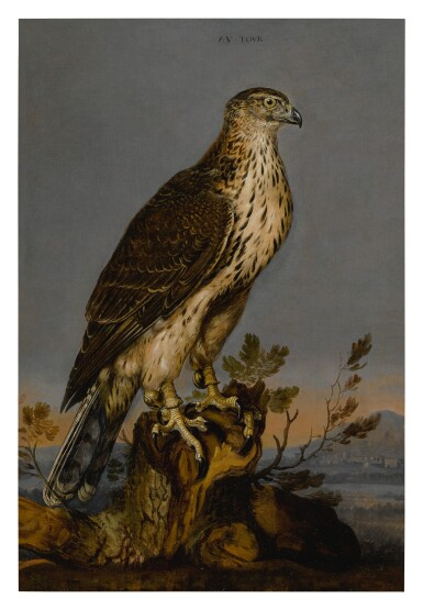 View 1. Thumbnail of Lot 105. CARSTIAN LUYCKX  |  A BROWN GYRFALCON PERCHED ON A TREE TRUNK WITH A LANDSCAPE BEYOND.