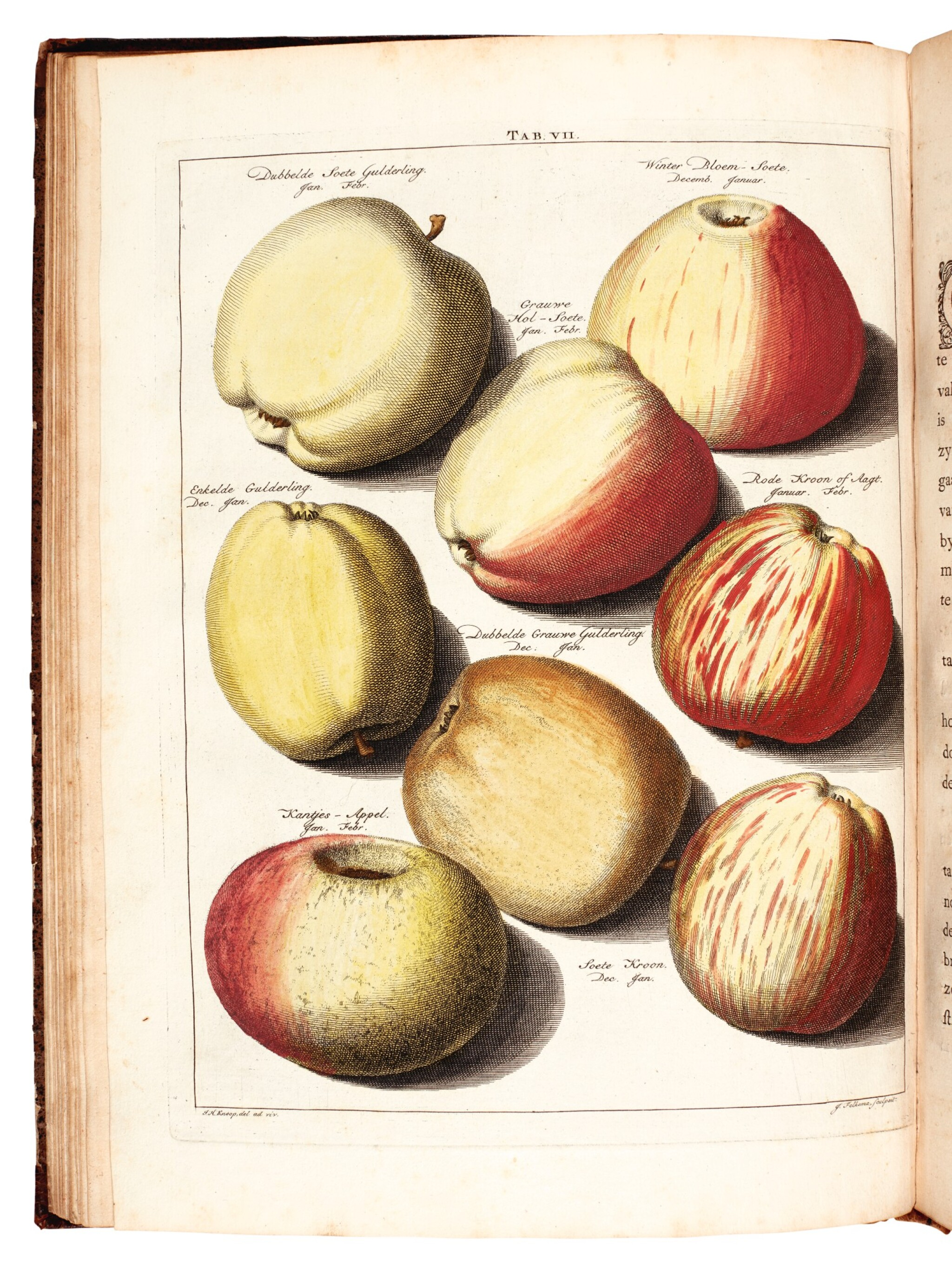 View full screen - View 1 of Lot 24. Knoop | Pomologia, Fructologia, Dendrologia, 1758-1763, 3 volumes.