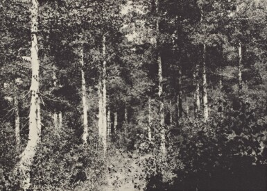 View 11. Thumbnail of Lot 78. The Sierra Club Outing, 1929.
