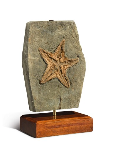 View 2. Thumbnail of Lot 85. A RARE STARFISH FOSSIL.
