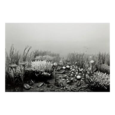 HIROSHI SUGIMOTO | CAMBRIAN PERIOD
