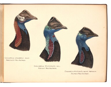 View 3. Thumbnail of Lot 29. Lionel Rothschild and John Keulemans | Album of drawings of cassowaries, together with their printed book on the subject.