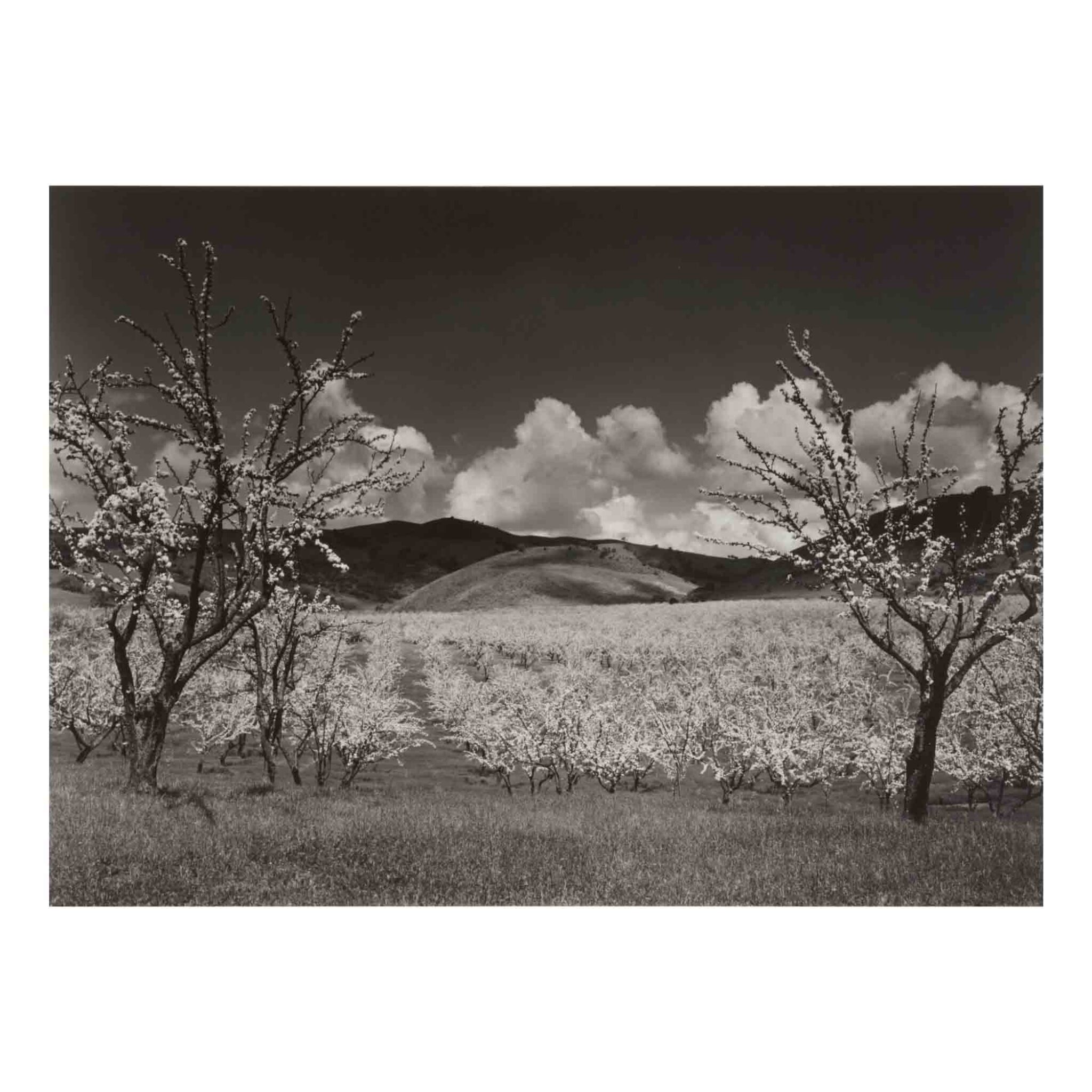 View 1 of Lot 103. 'Orchard, South of San Jose, California'.