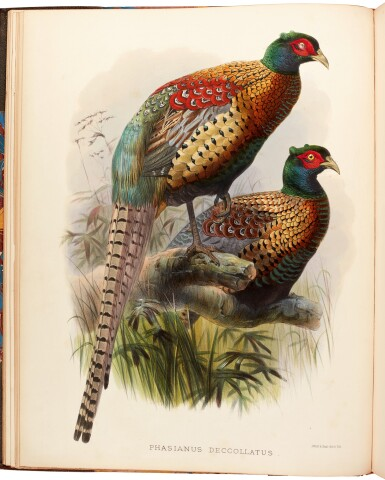 View 1. Thumbnail of Lot 9. Daniel Giraud Elliot | Monograph of the Phasianidae, or Family of the Pheasants, 1870-1872, coloured plates.