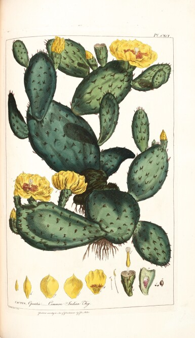 Miller | Figures of Beautiful, Useful, and Uncommon Plants described in the Gardeners' Dictionary, 1809