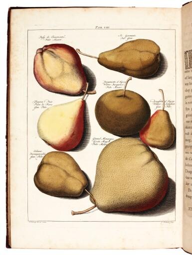 View 2. Thumbnail of Lot 24. Knoop | Pomologia, Fructologia, Dendrologia, 1758-1763, 3 volumes.