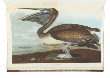 View 4. Thumbnail of Lot 250. JOHN JAMES AUDUBON | The Birds of America; from Original Drawings by John James Audubon. London: Published by the Author, 1827–1838.