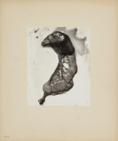 View 2. Thumbnail of Lot 79. 'Negative #74' (Chicken Parts) .
