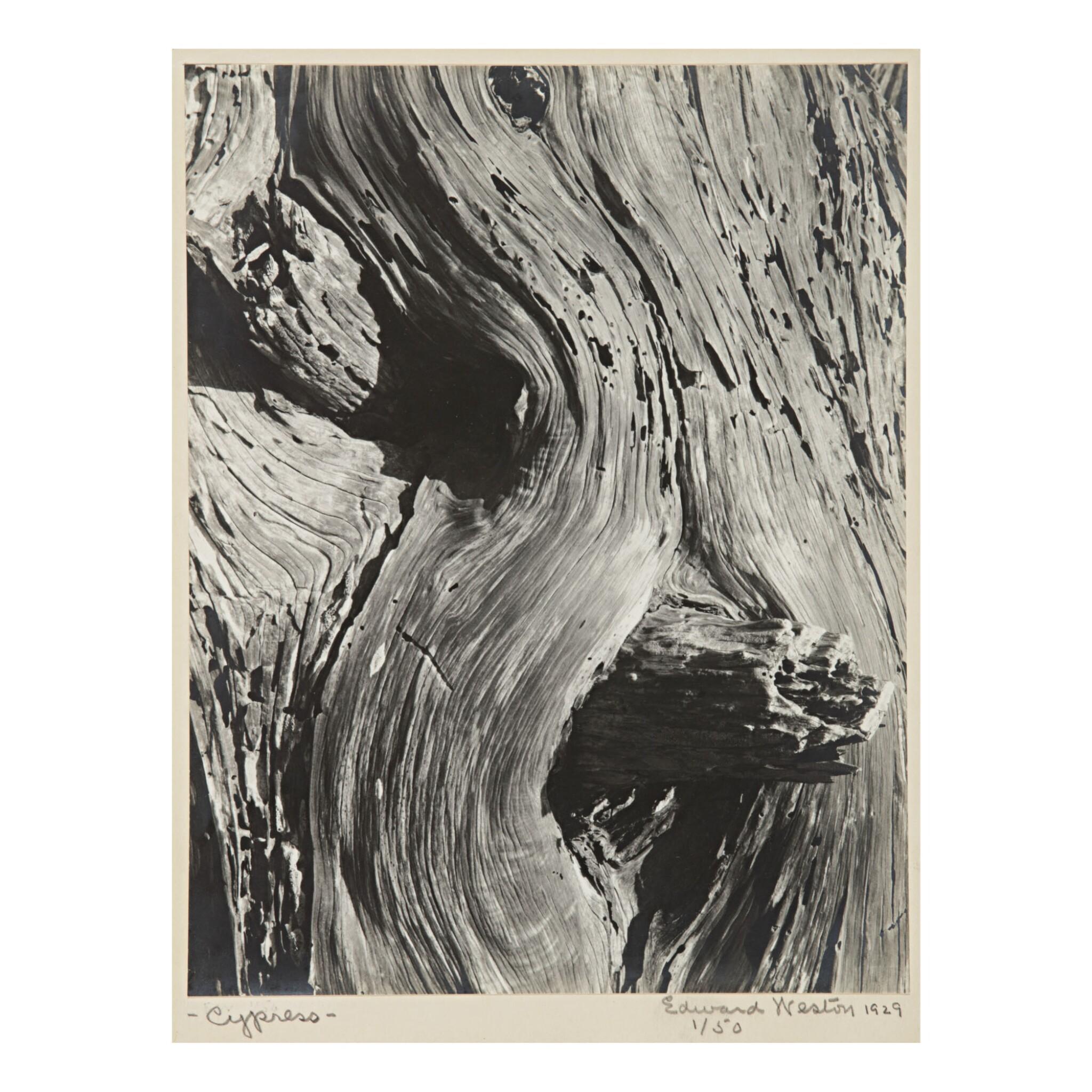 EDWARD WESTON   'CYPRESS'