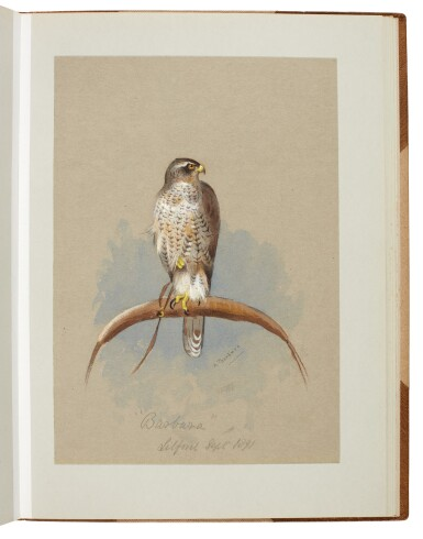 View 6. Thumbnail of Lot 33. Archibald Thorburn | An album containing eight original drawings of birds of prey.