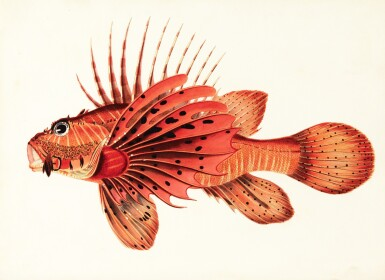 View 1. Thumbnail of Lot 296. Bennett | Fishes found on the Coast of Ceylon, 1830.