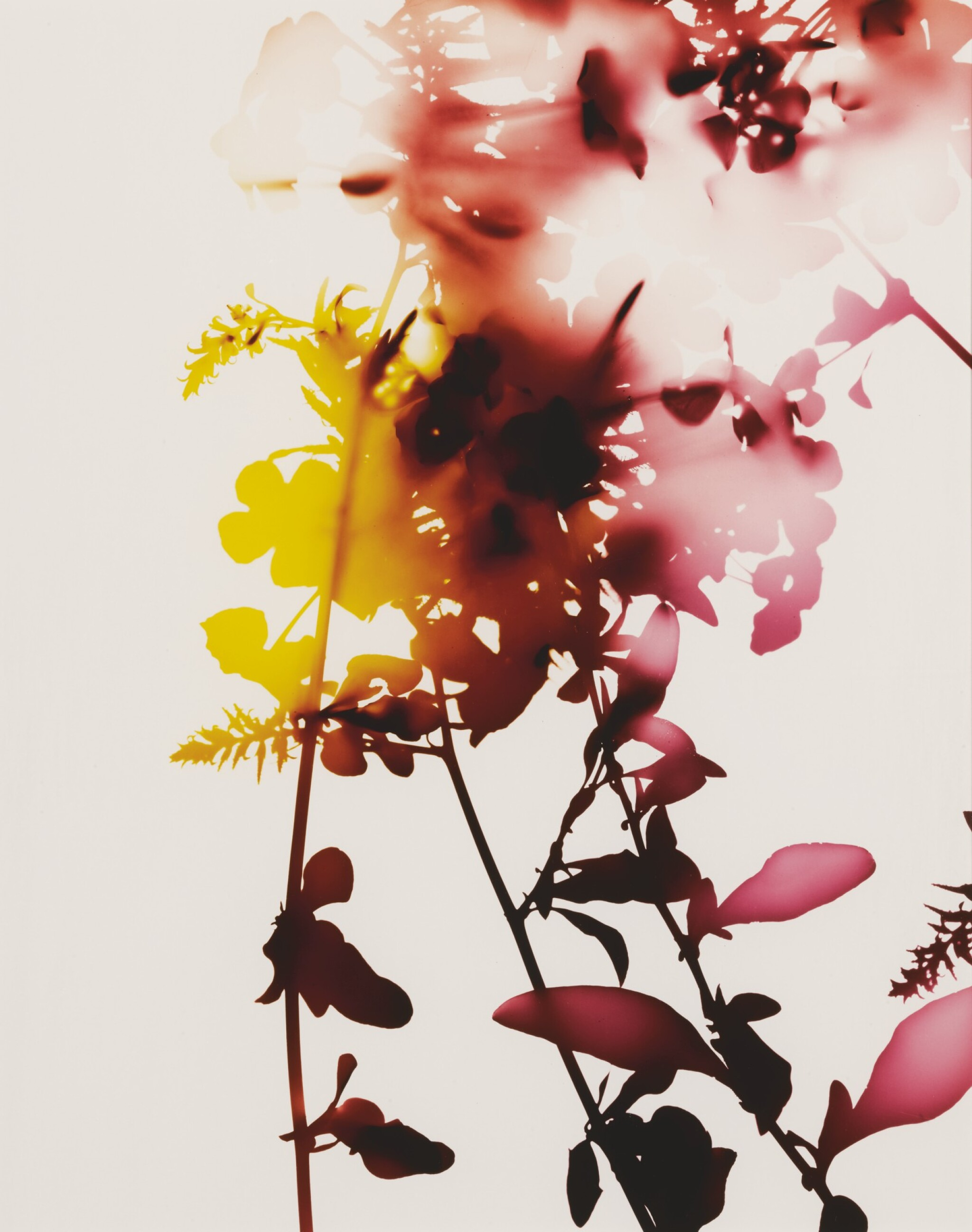 View full screen - View 1 of Lot 58. JAMES WELLING | SELECTED IMAGES FROM FLOWERS (#005, #008, #009).