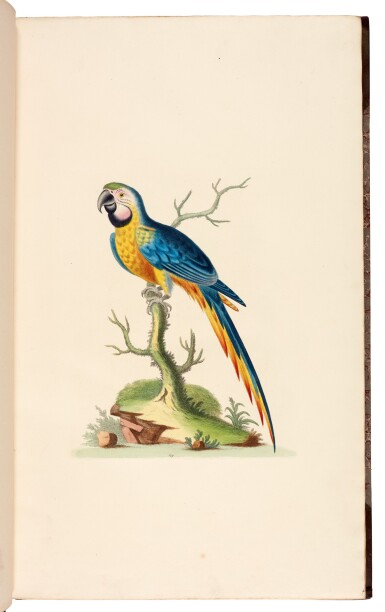 View 5. Thumbnail of Lot 28. EDWARDS   A natural history of birds [Gleanings of natural history], 1802–1806 (watermarks 1816–1824).