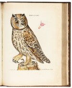 Schaeffer | Elementa ornithologica iconibus, 1779