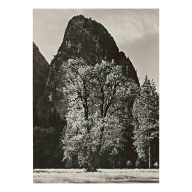 View 1. Thumbnail of Lot 82. Oak Tree, Autumn, Yosemite Valley, CA.