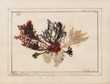 View 3. Thumbnail of Lot 89. ALGUIER. Ile des Pins (Nouvelle Calédonie). Album in-4 (couv. illustrée), 37 pl. in-4 et 2 pl. in-12..