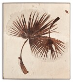 EXTREMELY RARE DOUBLE FOSSIL PALM FROND